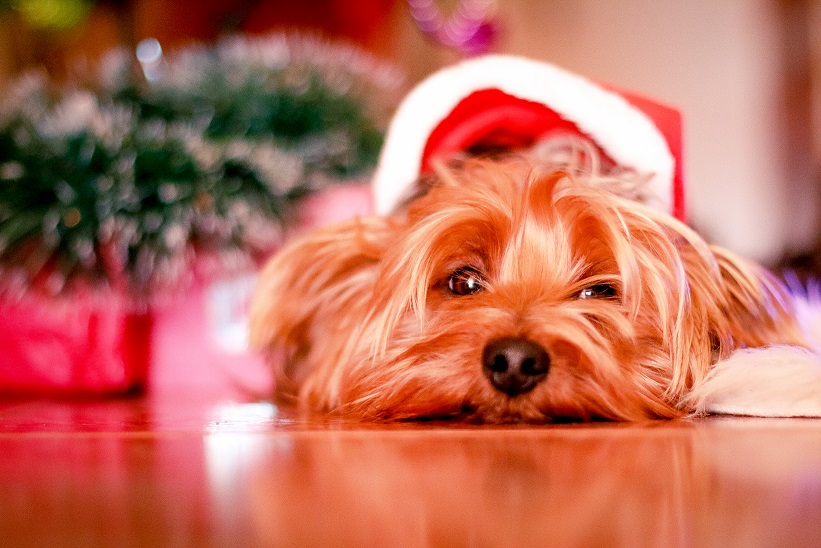 Janey Loves – Spotlight on Christmas Gifts…. Christmas is for Dogs too! – Natural DogCare