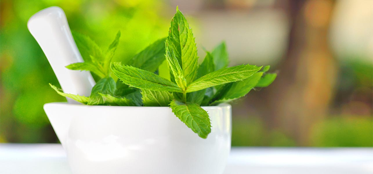 The Beauty of Fresh Mint