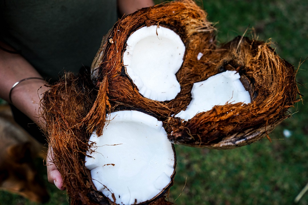 7 Reasons why you should love coconut oil
