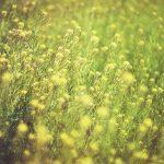 hay-fever-season