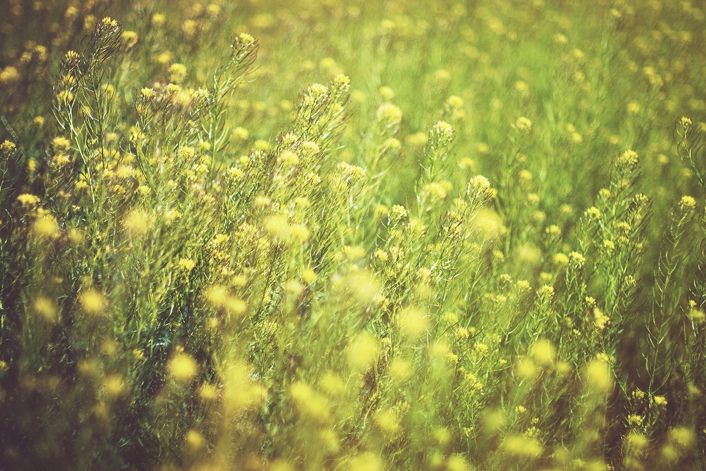 Stay 'Naturally' Comfortable in Hay Fever Season