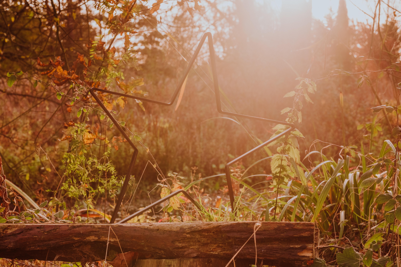 albion nights autumn