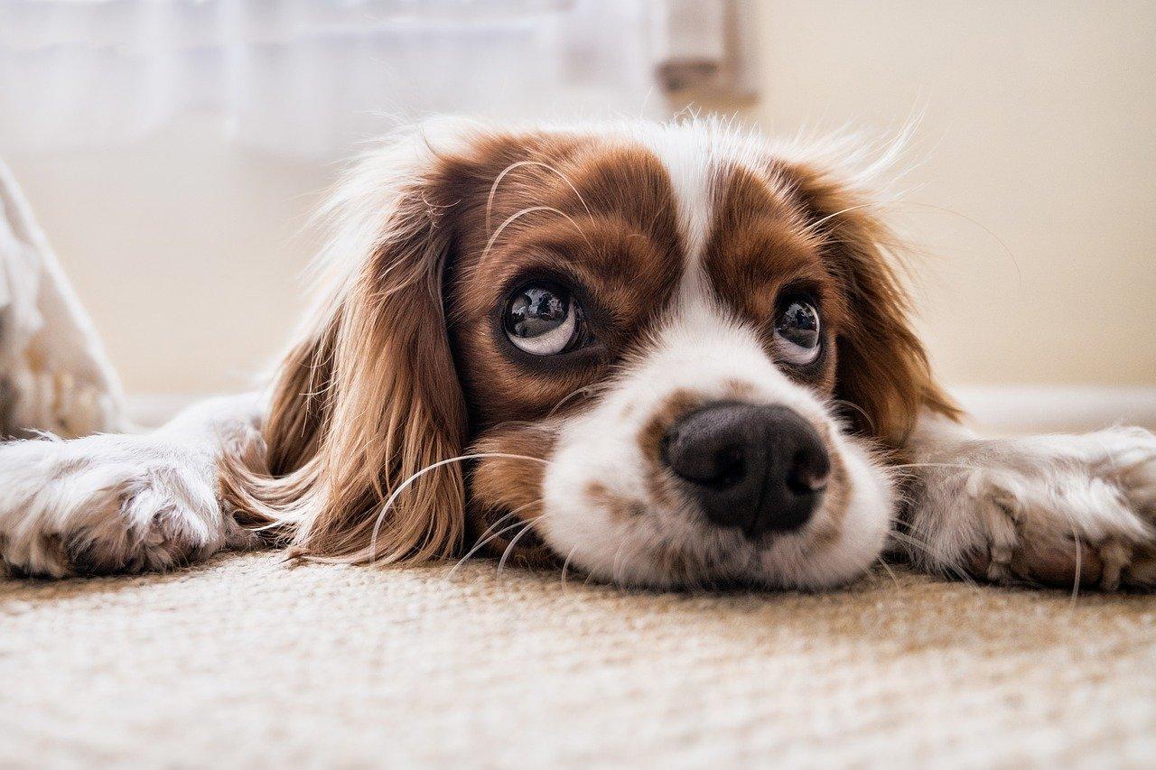 dog big eyes guest post