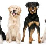 Natural Petcare